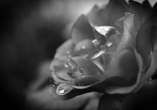 drop-of-water-4447343_640