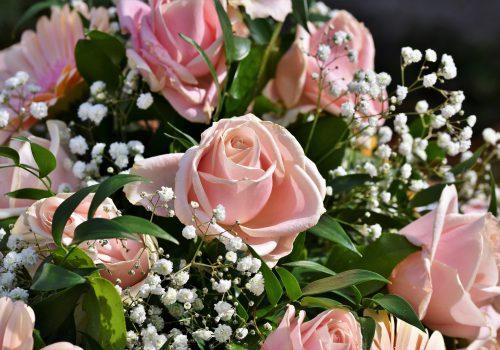 rose-4072398_1920